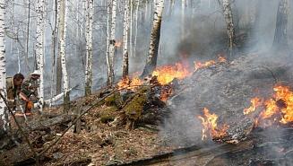 Особый противопожарный режим введен в Подмосковье